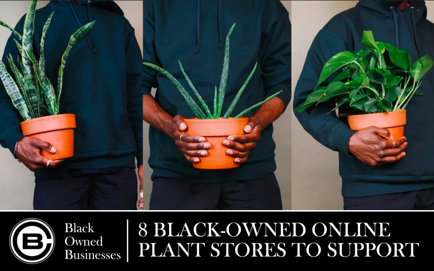 8 Black-Owned Online Plant Stores to Support